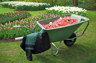 Garden Planting Wicklow Dublin Kildare Carlow Wexford