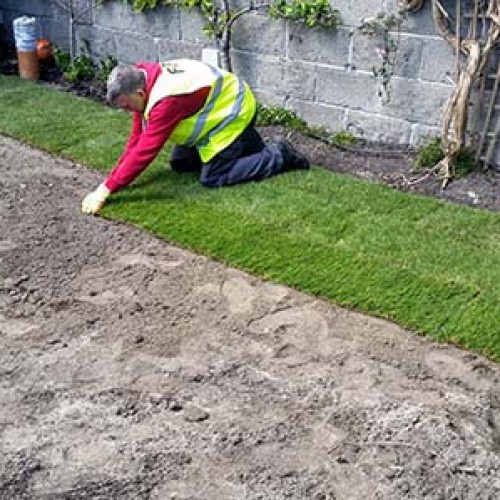 Laying Roll Out Lawn
